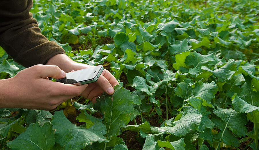 Field Crop Monitoring
